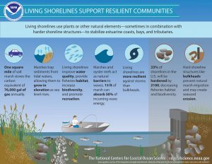 Graphic from the NOAA on living shorelines