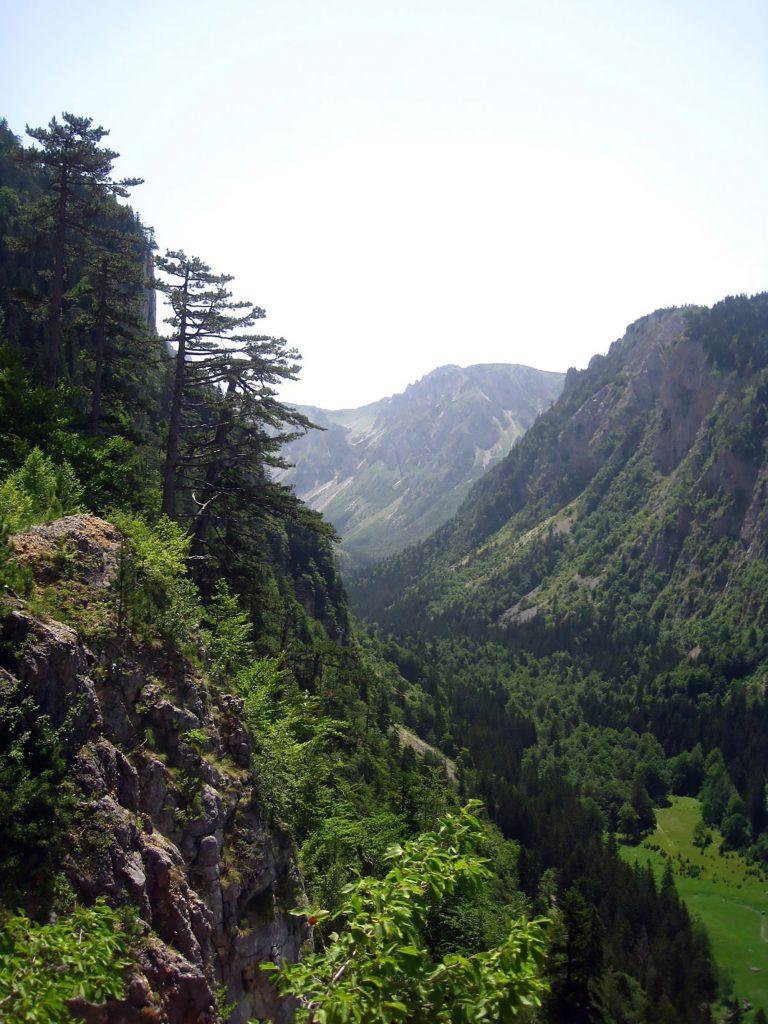 Mt Durmitor forest