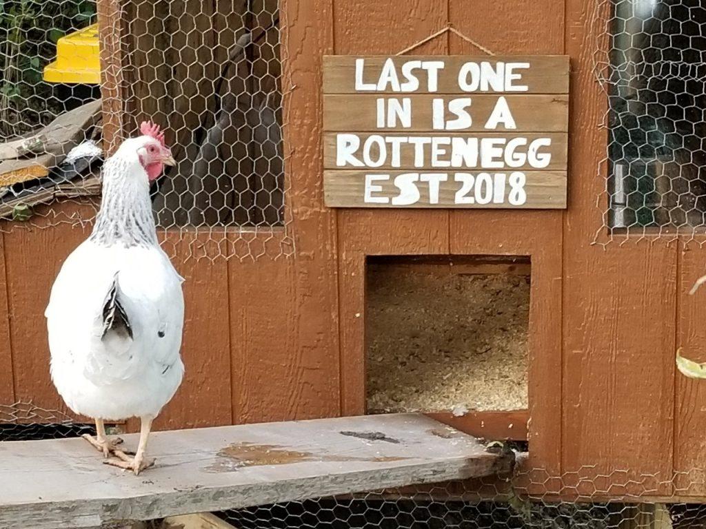 IBI Group Ideas – My Smart Chicken Coop